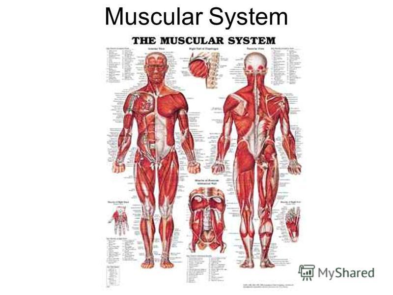 Skeletal System