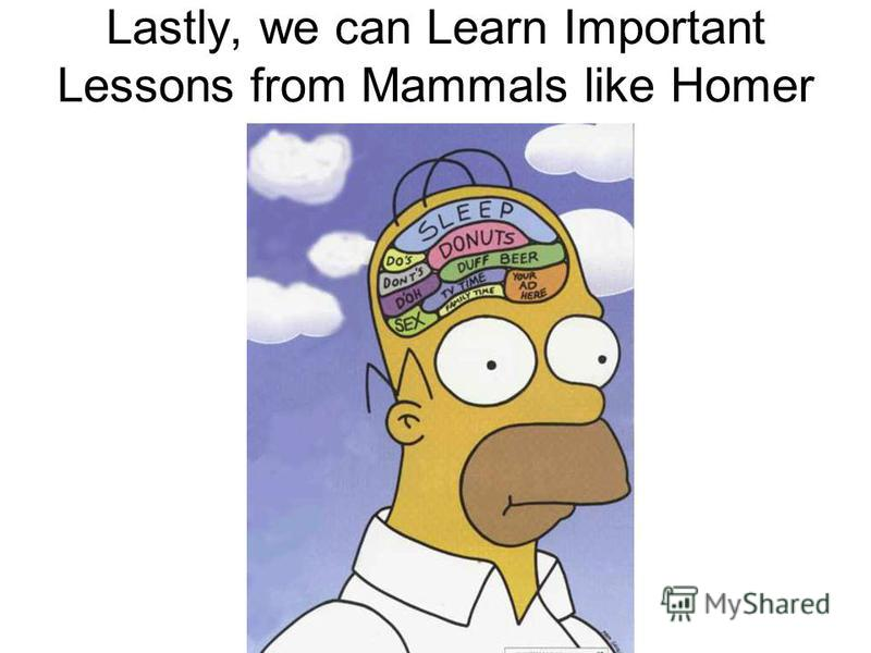 Lots of Mammals in the Simpsons