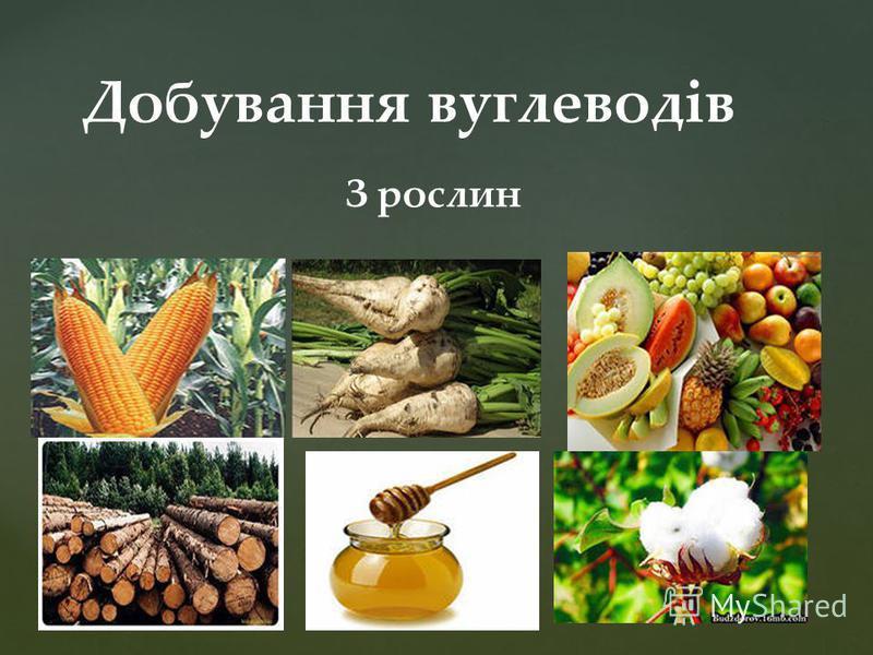 Добування вуглеводів З рослин