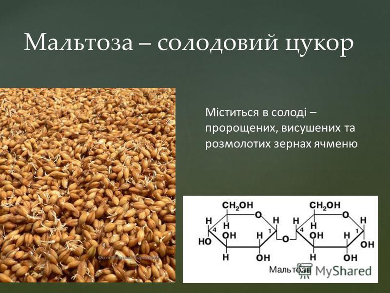 Мальтоза – солодовий цукор Міститься в солоді – пророщених, висушених та розмолотих зернах ячменю