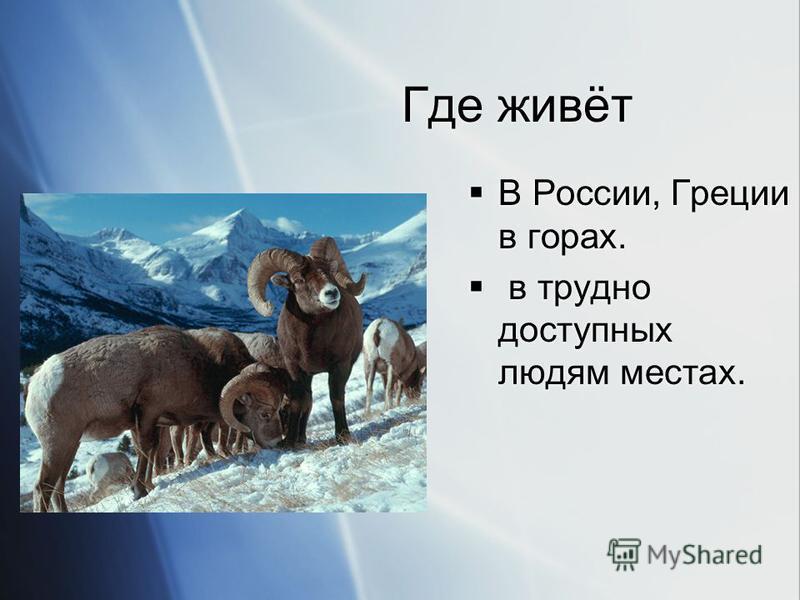 Где живёт В России, Греции в горах. в трудно доступных людям местах. В России, Греции в горах. в трудно доступных людям местах.