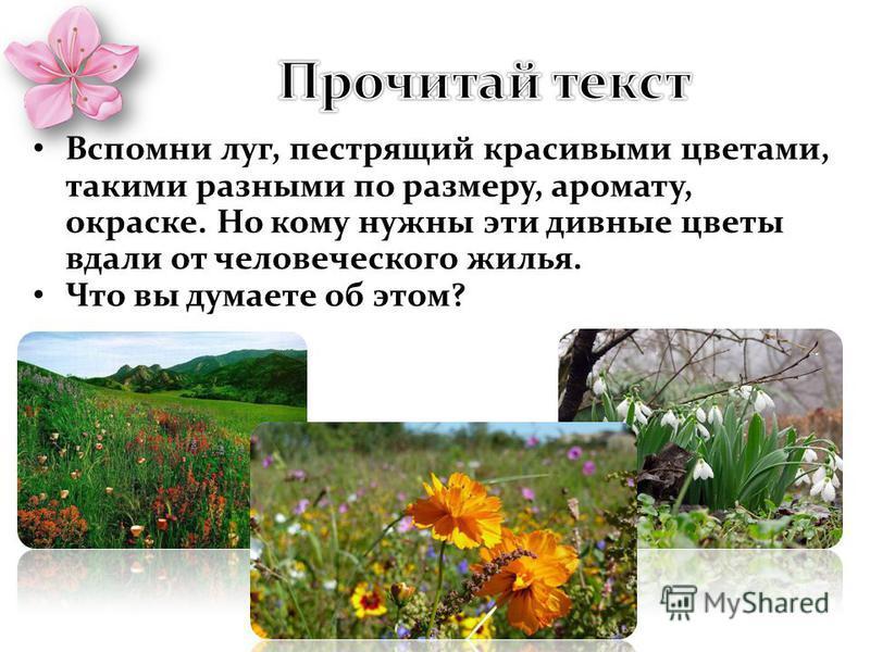 Вспомни луг, пестрящий красивыми цветами, такими разными по размеру, аромату, окраске. Но кому нужны эти дивные цветы вдали от человеческого жилья. Что вы думаете об этом?