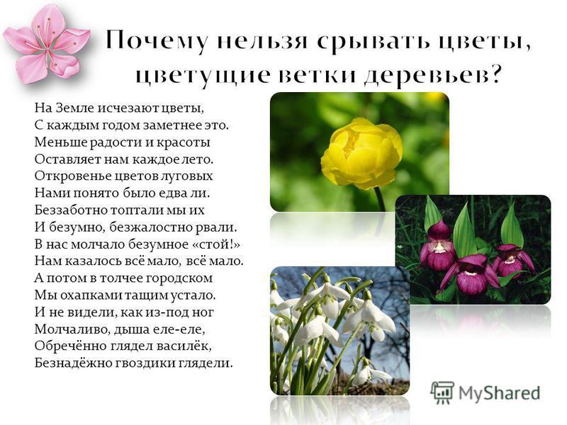 На Земле исчезают цветы, С каждым годом заметнее это. Меньше радости и красоты Оставляет нам каждое лето. Откровенье цветов луговых Нами понято было едва ли. Беззаботно топтали мы их И безумно, безжалостно рвали. В нас молчало безумное «стой!» Нам ка
