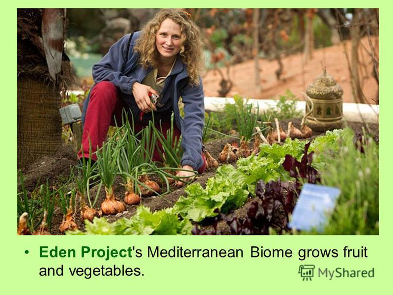 Eden Project's Mediterranean Biome grows fruit and vegetables.