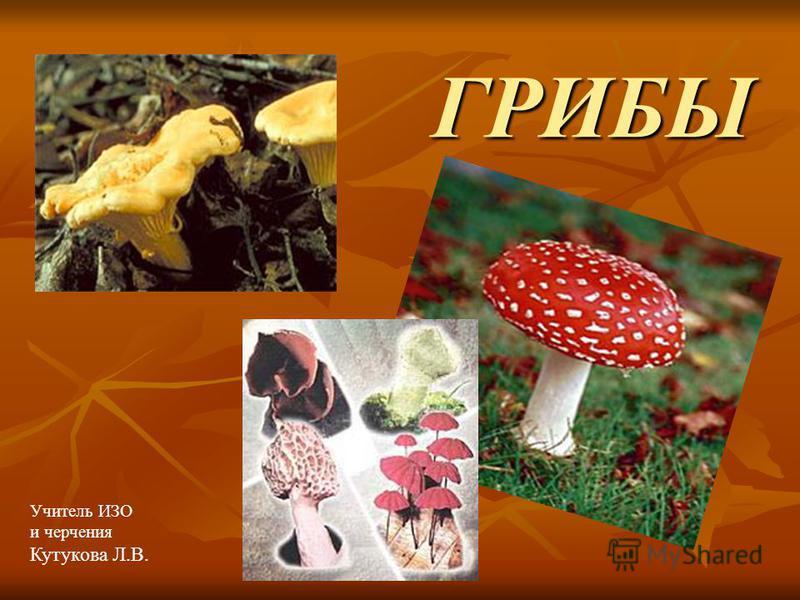 ГРИБЫ Учитель ИЗО и черчения Кутукова Л.В.