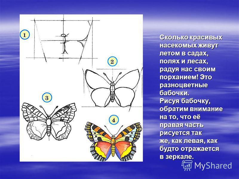 Сколько красивых насекомых живут летом в садах, полях и лесах, радуя нас своим порханием! Это разноцветные бабочки. Рисуя бабочку, обратим внимание на то, что её правая часть рисуется так же, как левая, как будто отражается в зеркале.