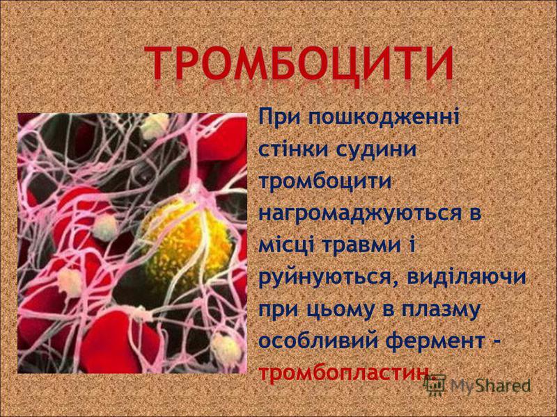 При пошкодженні стінки судини тромбоцити нагромаджуються в місці травми і руйнуються, виділяючи при цьому в плазму особливий фермент - тромбопластин.