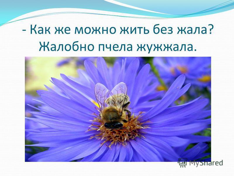 - Как же можно жить без жала? Жалобно пчела жужжала.