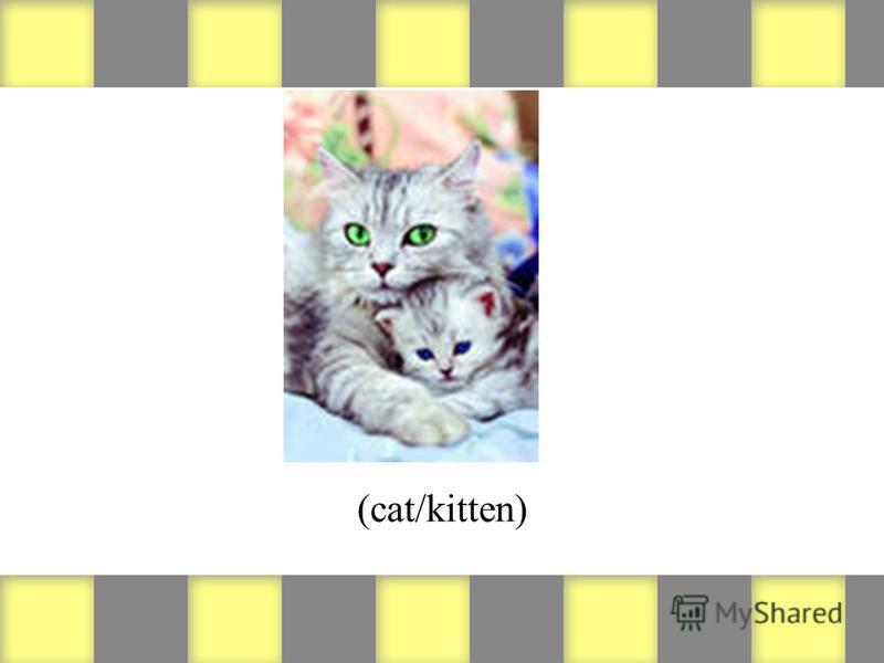 (cat/kitten)