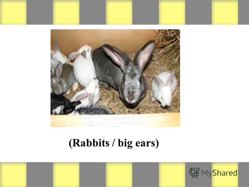 (Rabbits / big ears)