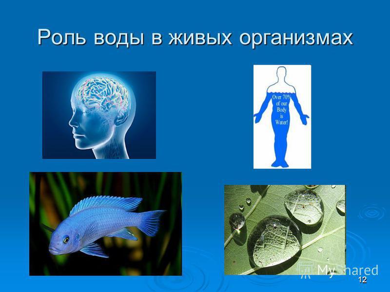 1212 Роль воды в живых организмах