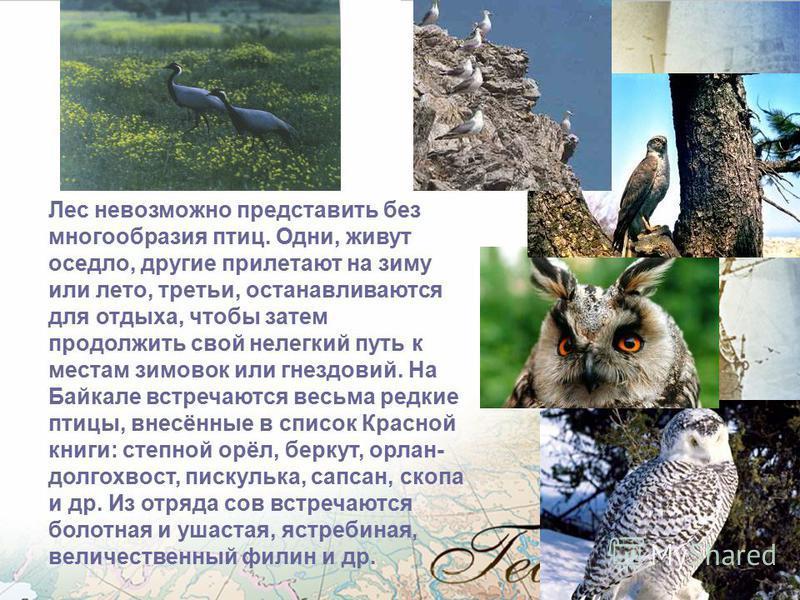 Разнообразен и интересен животный мир Байкала. На заповедных тропах Хамар-Дабана могут встретиться могучий лось, изящная косуля, кабарга, клыкастый кабан. Обычен и хозяин тайги бурый медведь. По берегам Байкала оставляют свои следы выдра и норка. В л