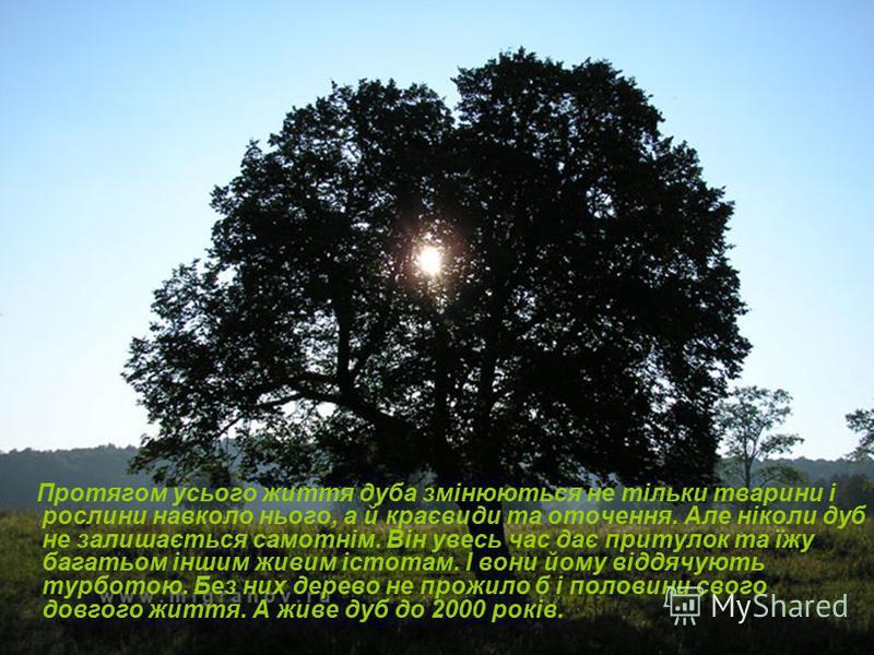 Протягом усього життя дуба змінюються не тільки тварини і рослини навколо нього, а й краєвиди та оточення. Але ніколи дуб не залишається самотнім. Він увесь час дає притулок та їжу багатьом іншим живим істотам. І вони йому віддячують турботою. Без ни