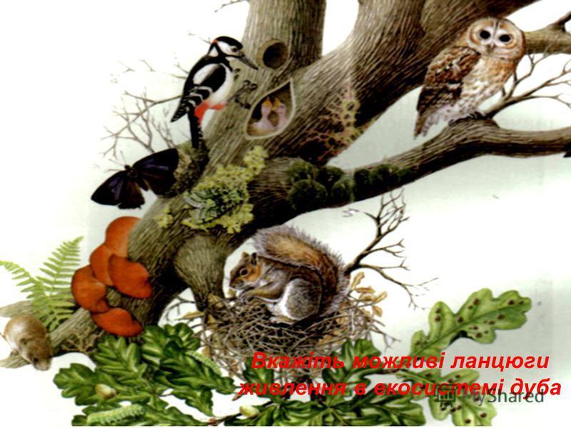 Вкажіть можливі ланцюги живлення в екосистемі дуба