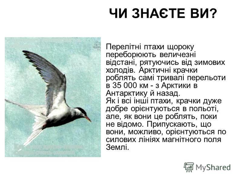 ЧИ ЗНАЄТЕ ВИ? Перелітні птахи щороку переборюють величезні відстані, рятуючись від зимових холодів. Арктичні крачки роблять самі тривалі перельоти в 35 000 км - з Арктики в Антарктику й назад. Як і всі інші птахи, крачки дуже добре орієнтуються в пол