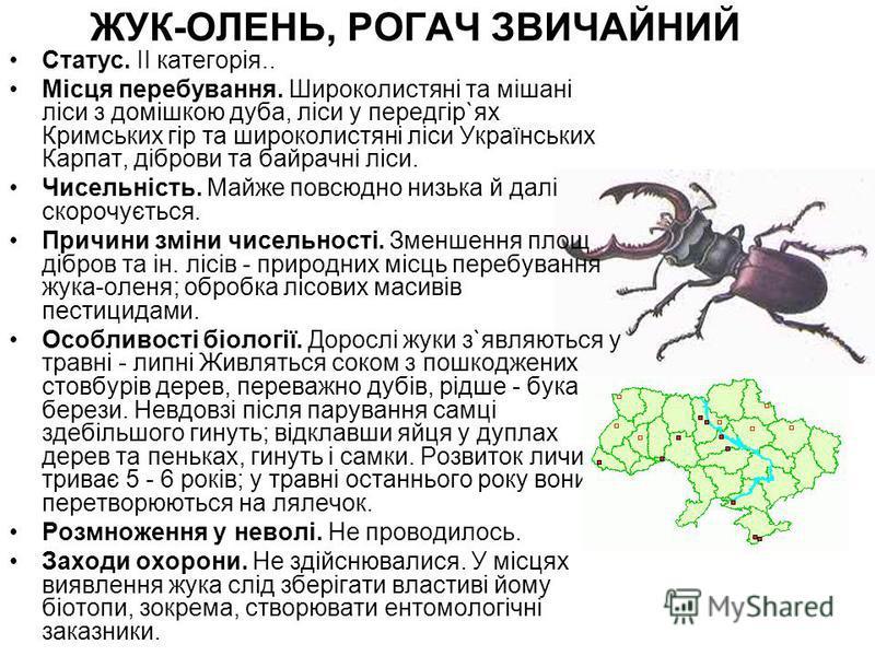 ЖУК-ОЛЕНЬ, РОГАЧ ЗВИЧАЙНИЙ Статус. II категорія.. Місця перебування. Широколистяні та мішані ліси з домішкою дуба, ліси у передгір`ях Кримських гір та широколистяні ліси Українських Карпат, діброви та байрачні ліси. Чисельність. Майже повсюдно низька