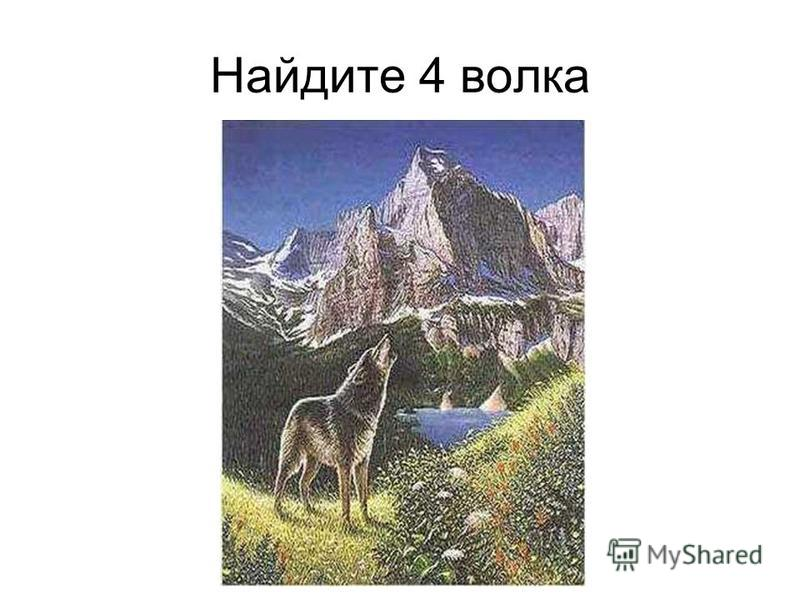 Найдите 4 волка