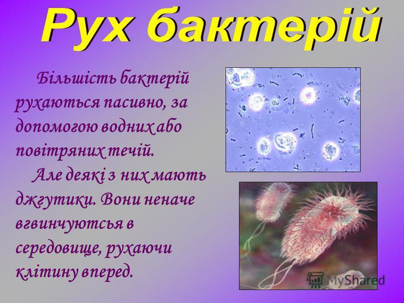 Більшість бактерій рухаються пасивно, за допомогою водних або повітряних течій. Але деякі з них мають джгутики. Вони неначе вгвинчуютсья в середовище, рухаючи клітину вперед.