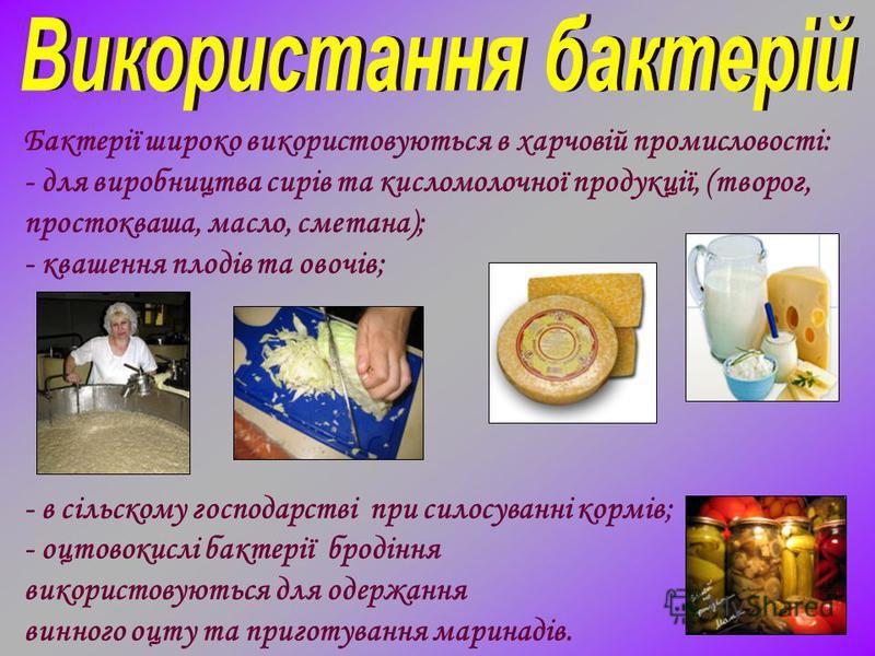 Бактерії широко використовуються в харчовій промисловості: - для виробництва сирів та кисломолочної продукції, (творог, простокваша, масло, сметана); - квашення плодів та овочів; - в сільскому господарстві при силосуванні кормів; - оцтовокислі бактер