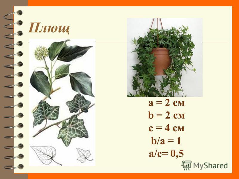 Орхидея a = 6,6 см b = 4,6 см c = 11,2 см b/a = 0,696 a/c = 0,589