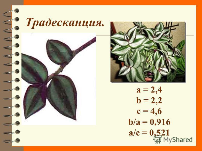 Плющ a = 2 см b = 2 см с = 4 см b/a = 1 a/c= 0,5