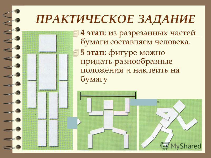 ПРАКТИЧЕСКОЕ ЗАДАНИЕ 4 3 этап : первую часть разделяем на голову и туловище. Вторую и третью части делим пополам и еще раз пополам.
