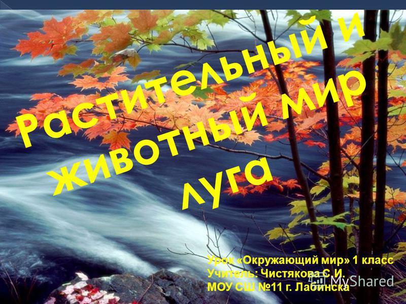 Растительный и животный мир луга Урок «Окружающий мир» 1 класс Учитель: Чистякова С.И. МОУ СШ 11 г. Лабинска