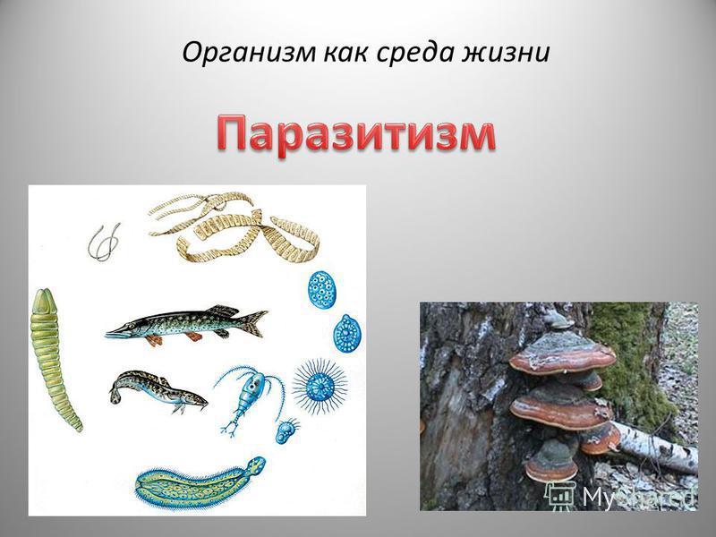 Организм как среда жизни