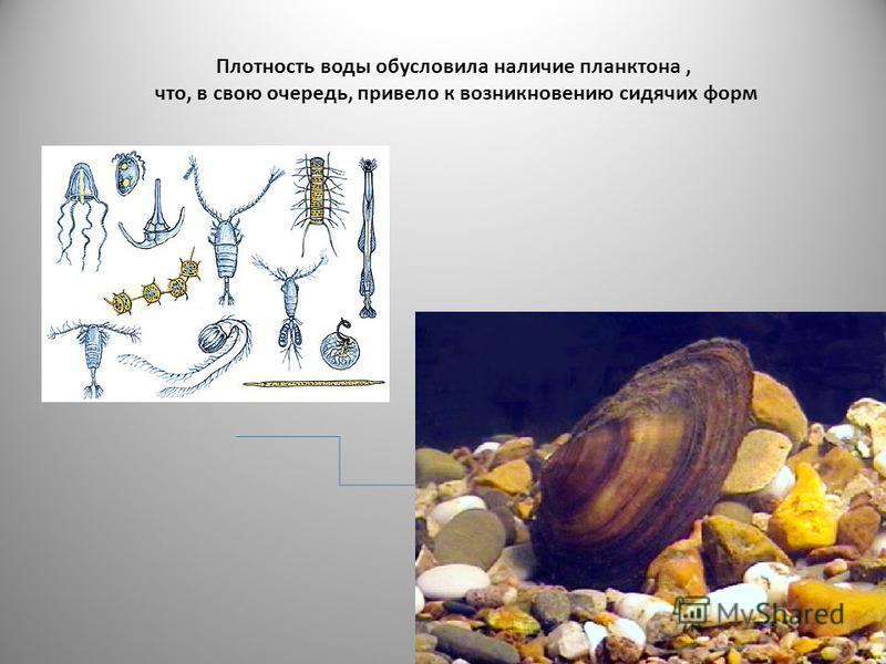 Плотность воды обусловила наличие планктона, что, в свою очередь, привело к возникновению сидячих форм