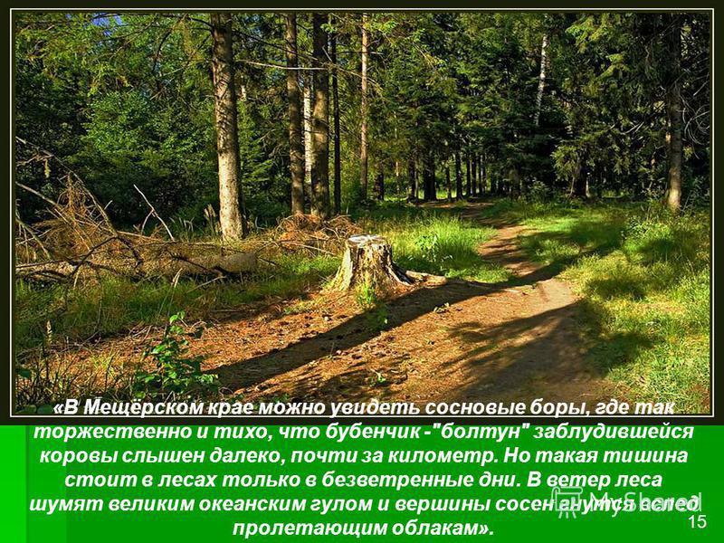 «В Мещёрском крае можно увидеть сосновые боры, где так торжественно и тихо, что бубенчик -