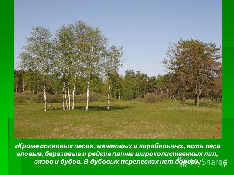 «Кроме сосновых лесов, мачтовых и корабельных, есть леса еловые, березовые и редкие пятна широколиственных лип, вязов и дубов. В дубовых перелесках нет дорог». 17