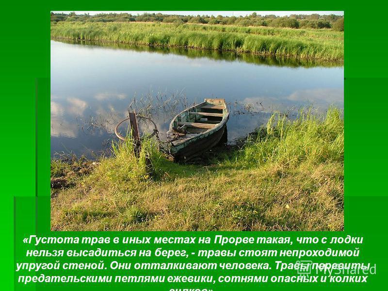 «Густота трав в иных местах на Прорве такая, что с лодки нельзя высадиться на берег, - травы стоят непроходимой упругой стеной. Они отталкивают человека. Травы перевиты предательскими петлями ежевики, сотнями опасных и колких силков».