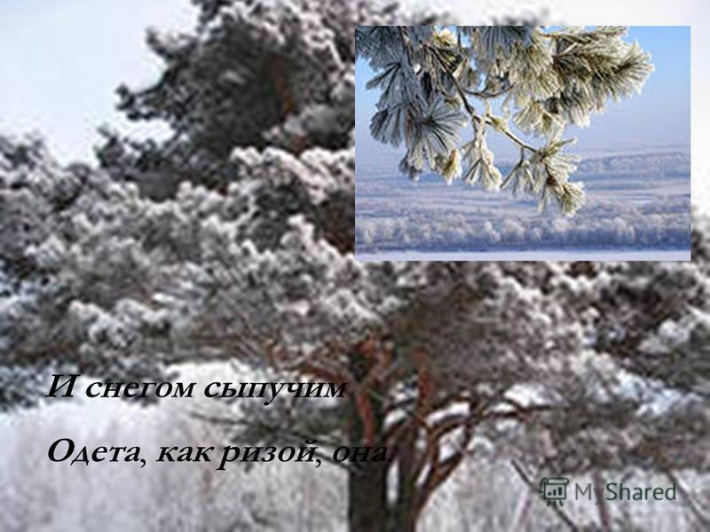 И снегом сыпучим Одета, как ризой, она.
