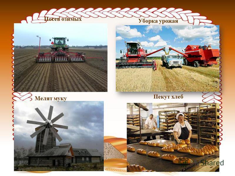 Посев озимых Уборка урожая Мелят муку Пекут хлеб