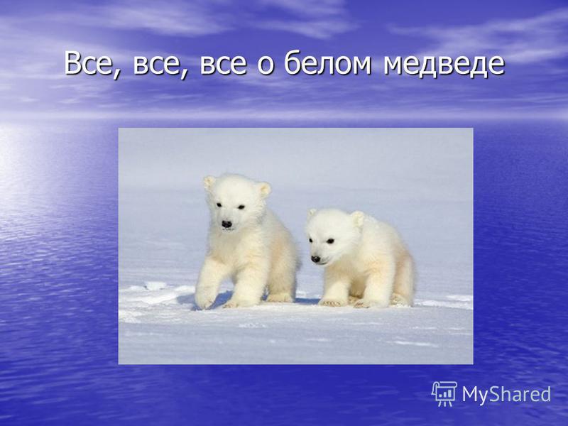 Все, все, все о белом медведе