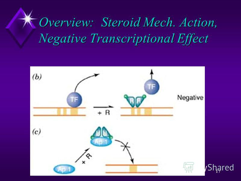 17 Overview: Steroid Mech. Action, Negative Transcriptional Effect