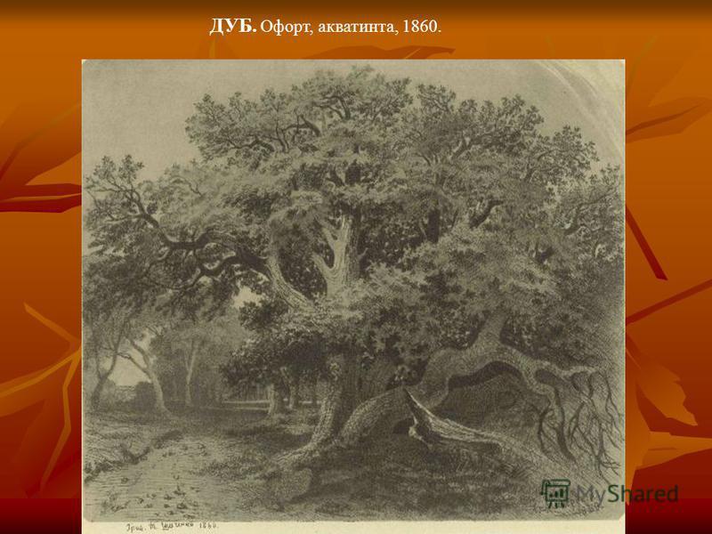 ДУБ. Офорт, акватинта, 1860.