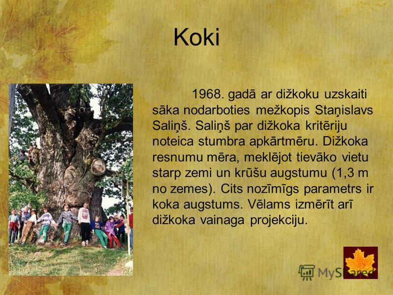 Koki 1968. gadā ar dižkoku uzskaiti sāka nodarboties mežkopis Staņislavs Saliņš. Saliņš par dižkoka kritēriju noteica stumbra apkārtmēru. Dižkoka resnumu mēra, meklējot tievāko vietu starp zemi un krūšu augstumu (1,3 m no zemes). Cits nozīmīgs parame