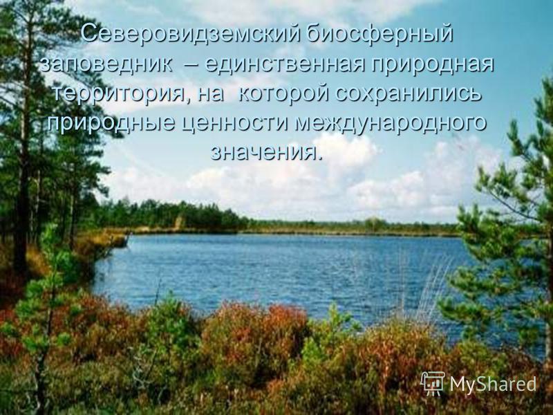 Северовидземский биосферный заповедник – единственная природная территория, на которой сохранились природные ценности международного значения.