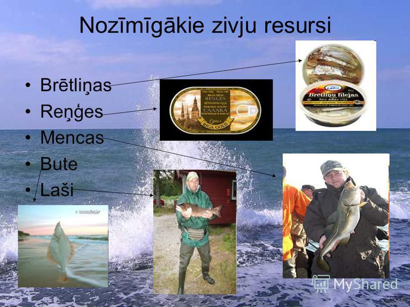 Nozīmīgākie zivju resursi Brētliņas Reņģes Mencas Bute Laši