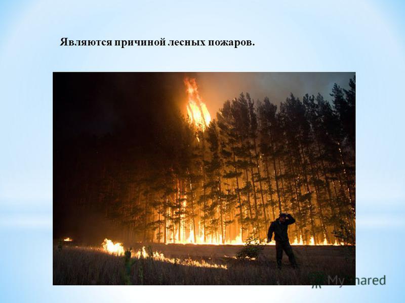 Являются причиной лесных пожаров.