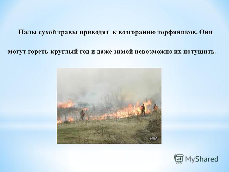 Палы сухой травы приводят к возгоранию торфяников. Они могут гореть круглый год и даже зимой невозможно их потушить.