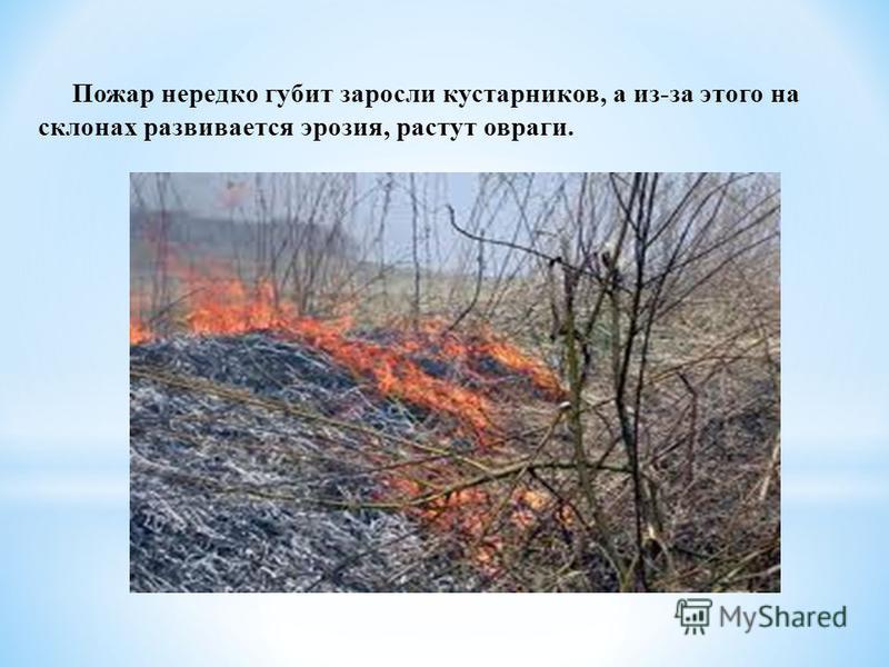Пожар нередко губит заросли кустарников, а из-за этого на склонах развивается эрозия, растут овраги.