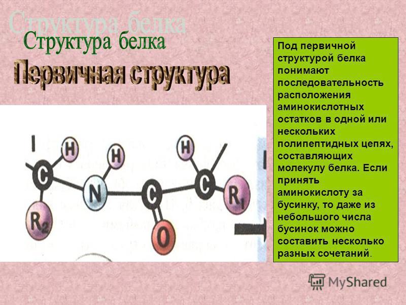 Под первичной структурой белка понимают последовательность расположения аминокислотных остатков в одной или нескольких полипептидных цепях, составляющих молекулу белка. Если принять аминокислоту за бусинку, то даже из небольшого числа бусинок можно с