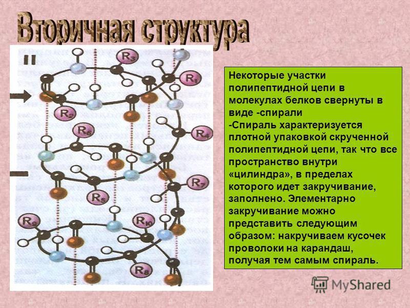 Некоторые участки полипептидной цепи в молекулах белков свернуты в виде -спирали -Спираль характеризуется плотной упаковкой скрученной полипептидной цепи, так что все пространство внутри «цилиндра», в пределах которого идет закручивание, заполнено. Э