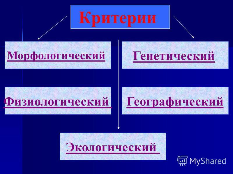 Критерии Физиологический Географический Экологический Генетический Морфологический