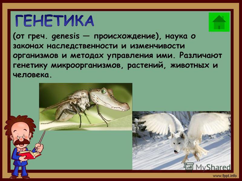 (от греч. genesis происхождение), наука о законах наследственности и изменчивости организмов и методах управления ими. Различают генетику микроорганизмов, растений, животных и человека.