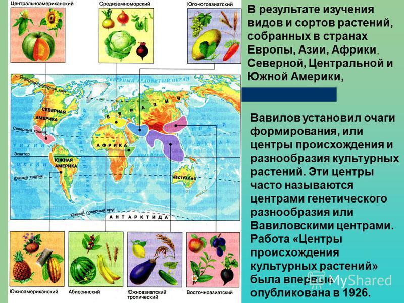 какие культурные растения выращивали в древние времина для
