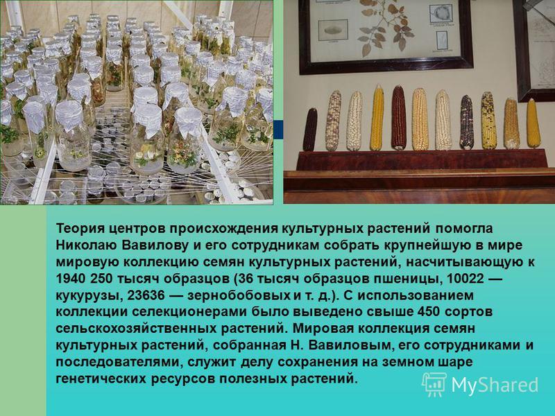 Теория центров происхождения культурных растений помогла Николаю Вавилову и его сотрудникам собрать крупнейшую в мире мировую коллекцию семян культурных растений, насчитывающую к 1940 250 тысяч образцов (36 тысяч образцов пшеницы, 10022 кукурузы, 236