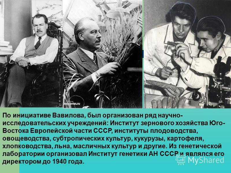 По инициативе Вавилова, был организован ряд научно- исследовательских учреждений: Институт зернового хозяйства Юго- Востока Европейской части СССР, институты плодоводства, овощеводства, субтропических культур, кукурузы, картофеля, хлопководства, льна